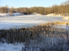Зимний пруд в Кугесях